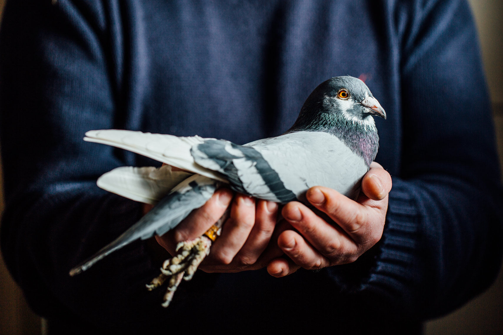visual narrative photography: the life of an irish pigeon breeder
