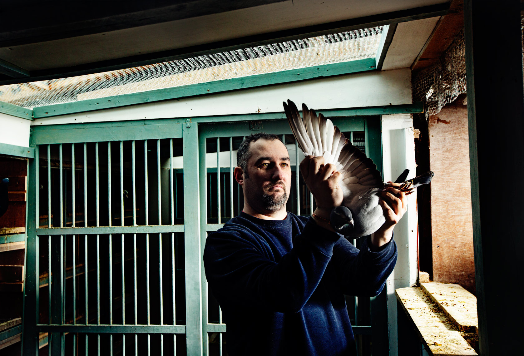 story photography: pigeon fancier inspecting his pigeon