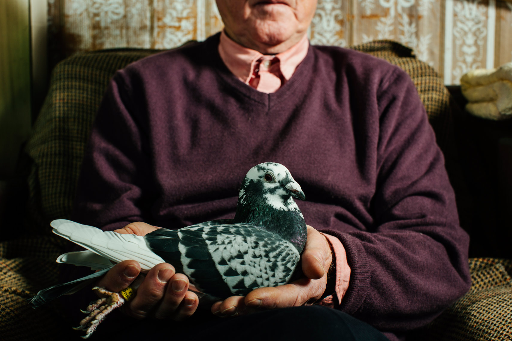 visual narrative photography: my life as a pigeon keeper