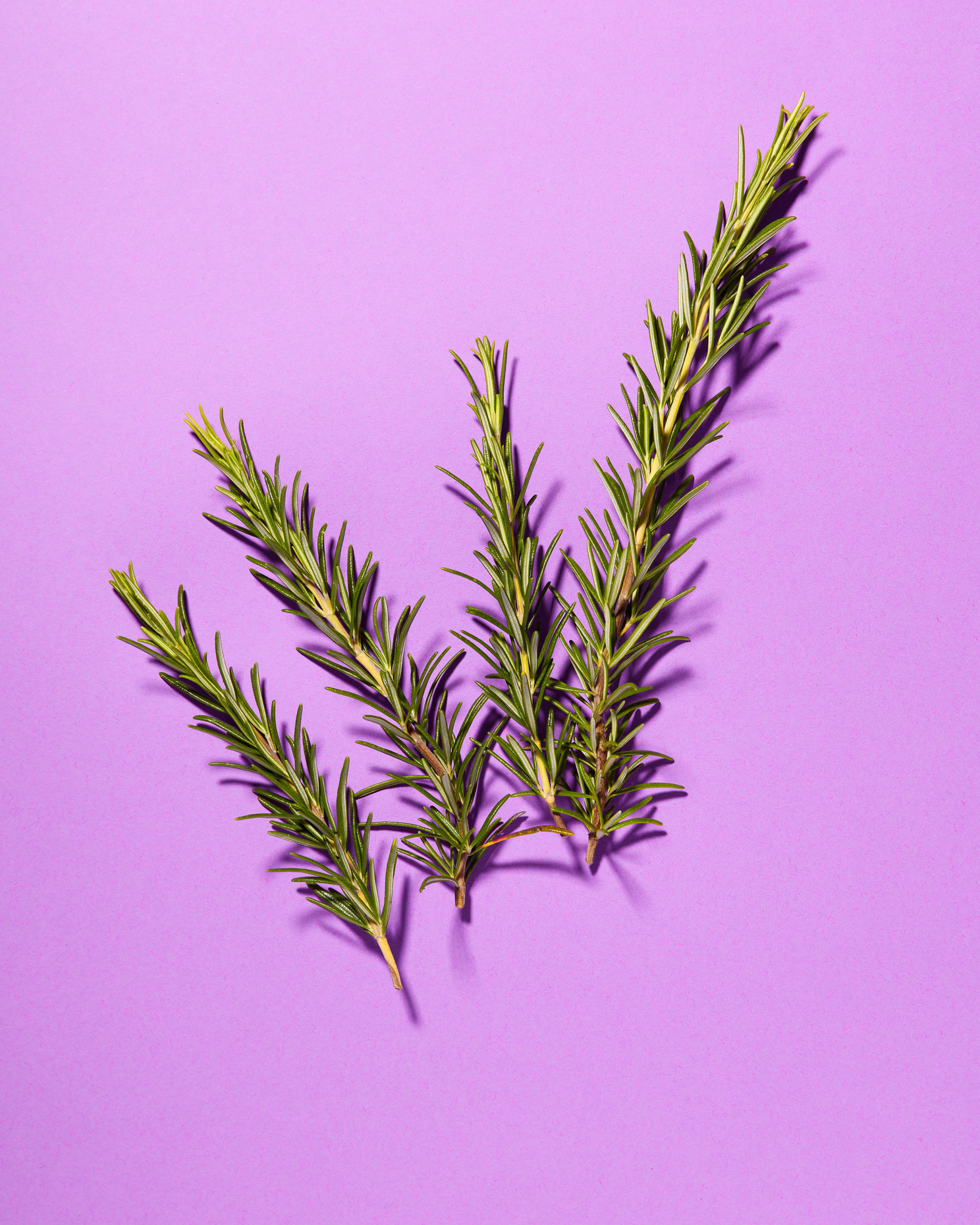 still life photography: sprigs of rosemary